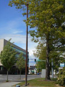 Streetcar Pole in Olympia