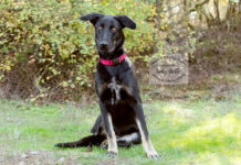 Adopt a Pet Dog of the Week Sally Belle