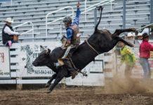 Grays Harbor clash of the cowboys cowboy on bull