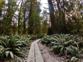 McLane-Creek-Snow