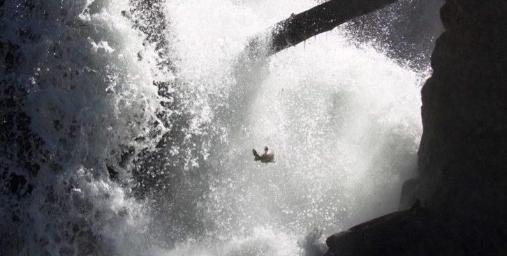 Salmon at Tumwater Falls