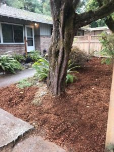 Rebuilding Together Thurston County Front yard redo