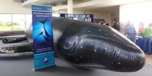 World Whale Day @ WET Science Center