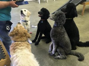 Feeding Time for Service Dogs