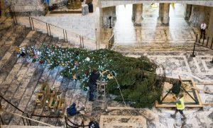 2017 Capitol tree set-up