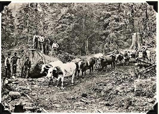 Logging on Chaenn Hill
