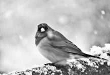 Olympia scenic snow winter thurston county bird