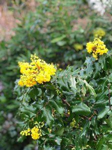 60 Chiropractic spring gardening