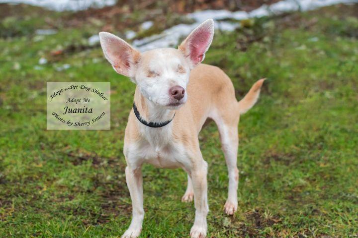 Adopt a Pet Dog of the Week Juanita