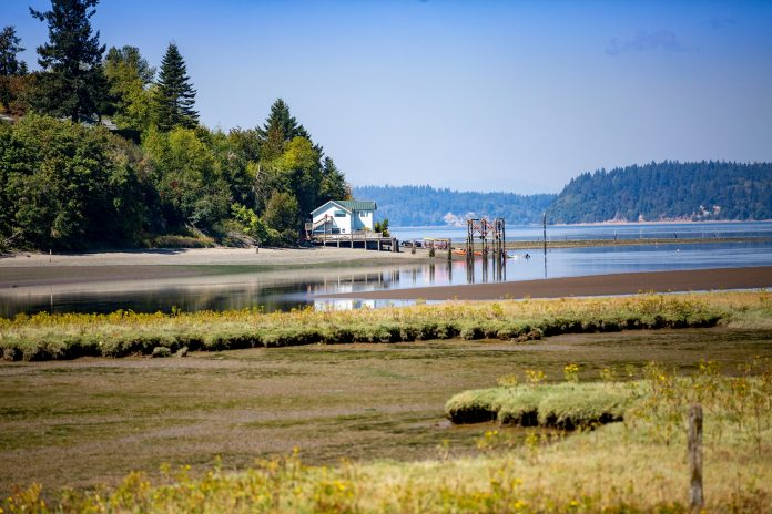 Discover Lacey Nisqually Refuge