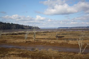 Nisqually wetland landscape