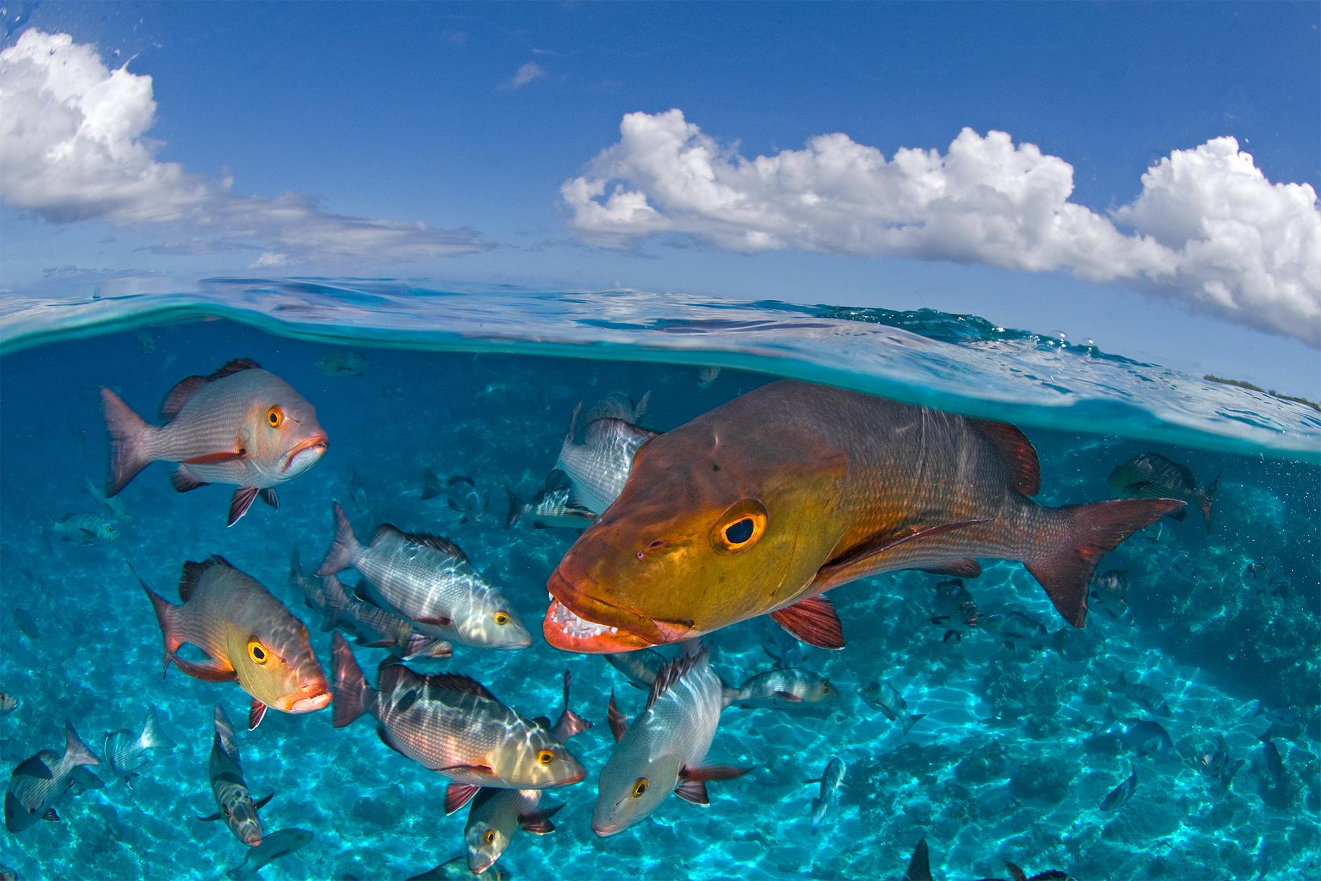 The Washington Center Peschak orange fish with smaller ones Award Winner