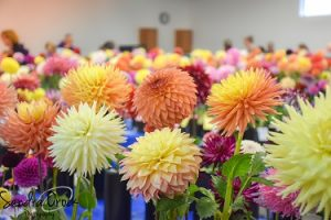 Evergreen State Dahlia Association Tuber Sale @ VFW Hall