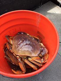 Hood Canal crabbing