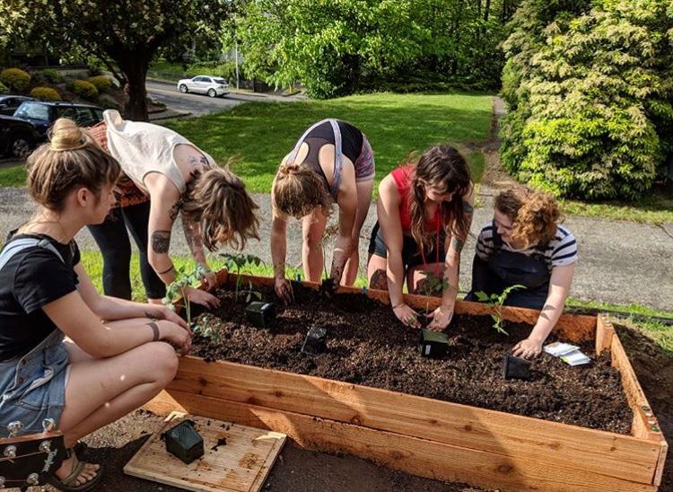 Thrifty Thurston Starts a Backyard Garden - ThurstonTalk