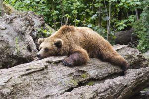 Penrose and associates physical therapy arthritis bear