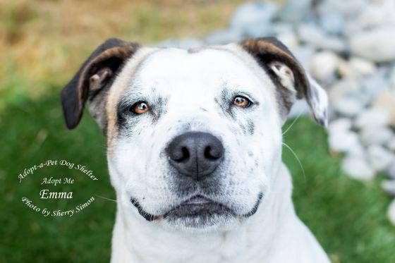 Adopt A Pet Dog of the Week Emma