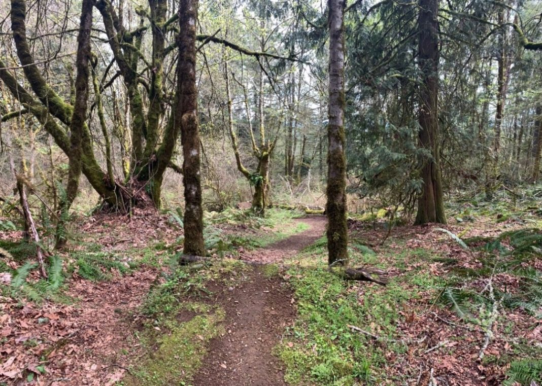 Trail at Kaiser Woods Olympia