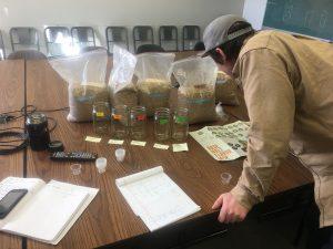 WSU barley research