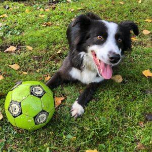 Adopt A Pet Rescue dog Story Abbi soccer ball