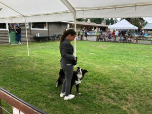 Adopt A Pet Rescue dog Story Lilie and Abbi at Fair
