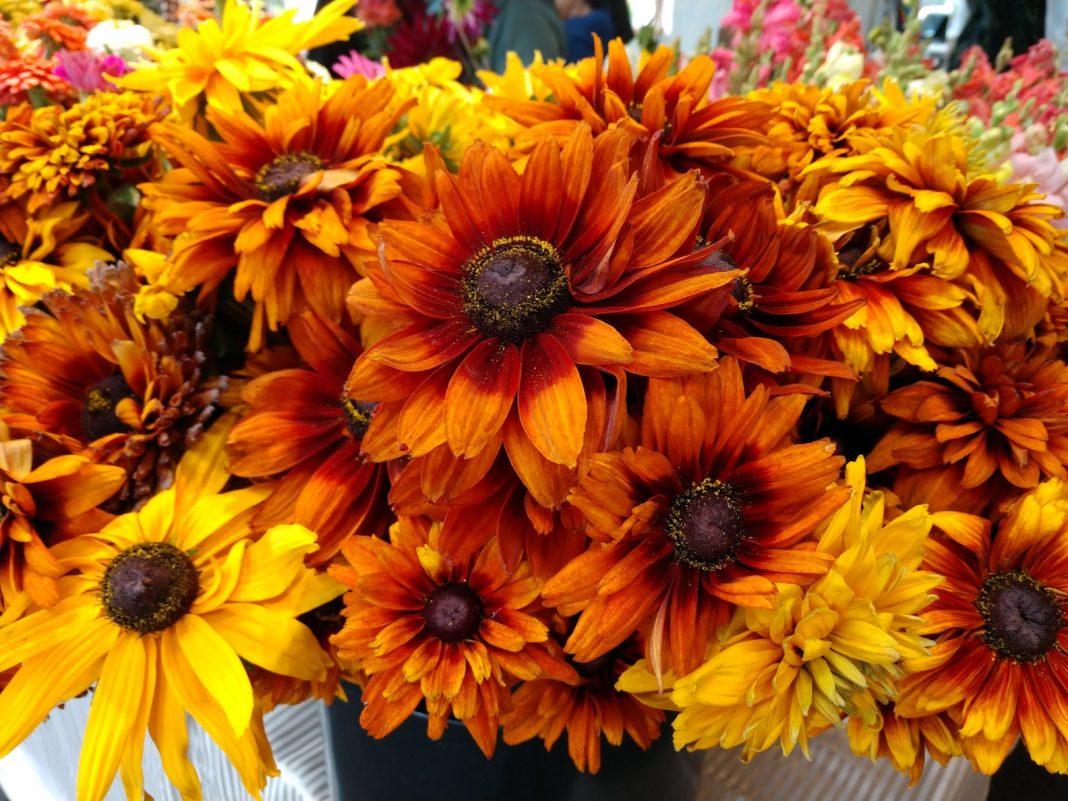 Olympia Farmers Market Fresh Flowers Olympia