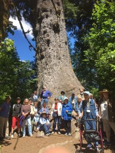 Senior Services For South Sound Trips and Tours Hiking