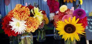 Daliahs at Cyndle's Fresh Cut Flowers