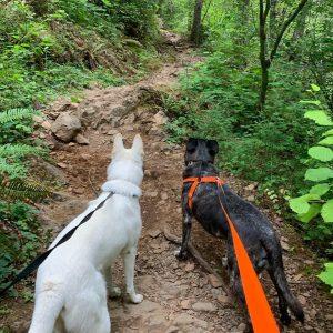 Hike Lower Lena