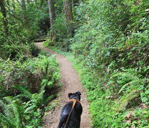 Hood Canal Hiking