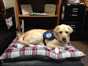 Providence St Peter Hospital Astro therapy dog