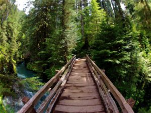 Quinault Rain Forest Pony Bridge