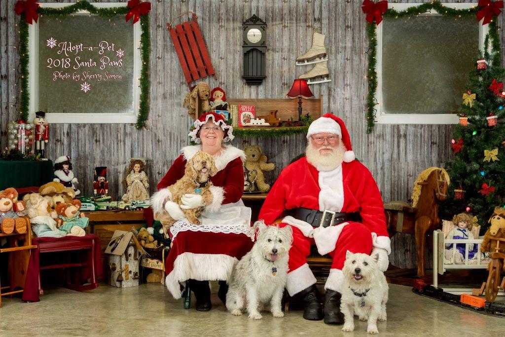 Santa Photos Olympia Adopt A Pet Santa Paws