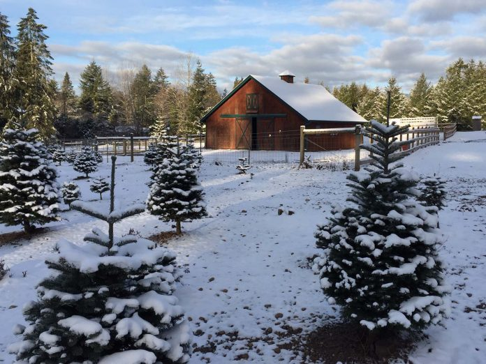 Christmas Tree Farms Thurston County Clyde n Dales Holiday Trees and Gifts 2