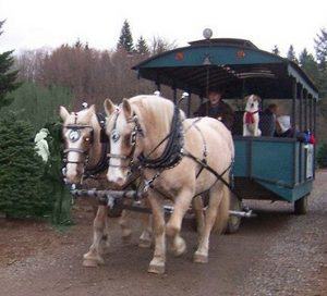 Christmas Tree Farms Thurston County Clyde n Dales Holiday Trees and Gifts