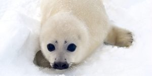 Arctic Adventure @ WET Science Center