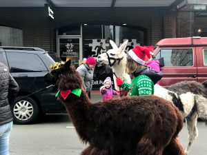 Olympia Downtown Alliance Downtown For the Holidays WSECU Jingle Bell Parade Llamas