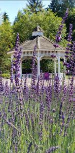 Lavender Holiday Sale @ Evergreen Valley Lavender Farm