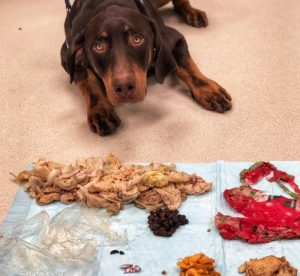 Olympia Pet Emergency Holiday Pet Safety Tips Table Scraps