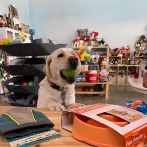 Visit Seabrook dog with ball at The Salty Dog