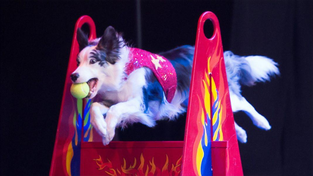 Washington Center holiday 2019 stunt dog experience