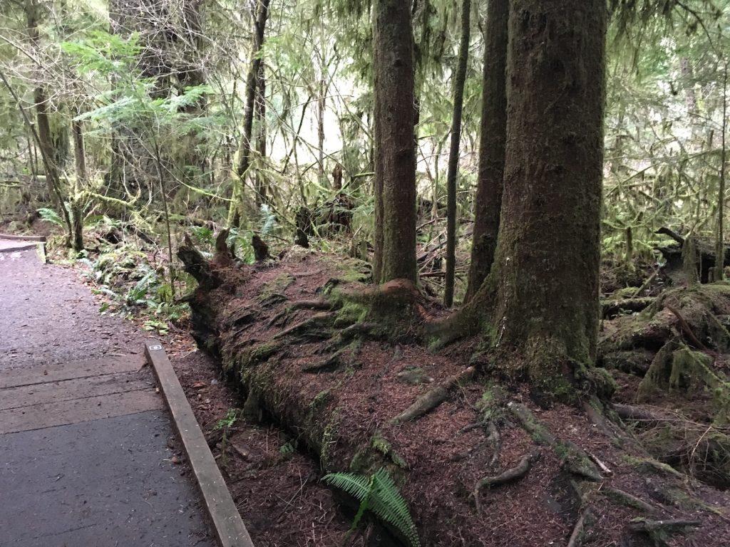 Watershed Park nurse log