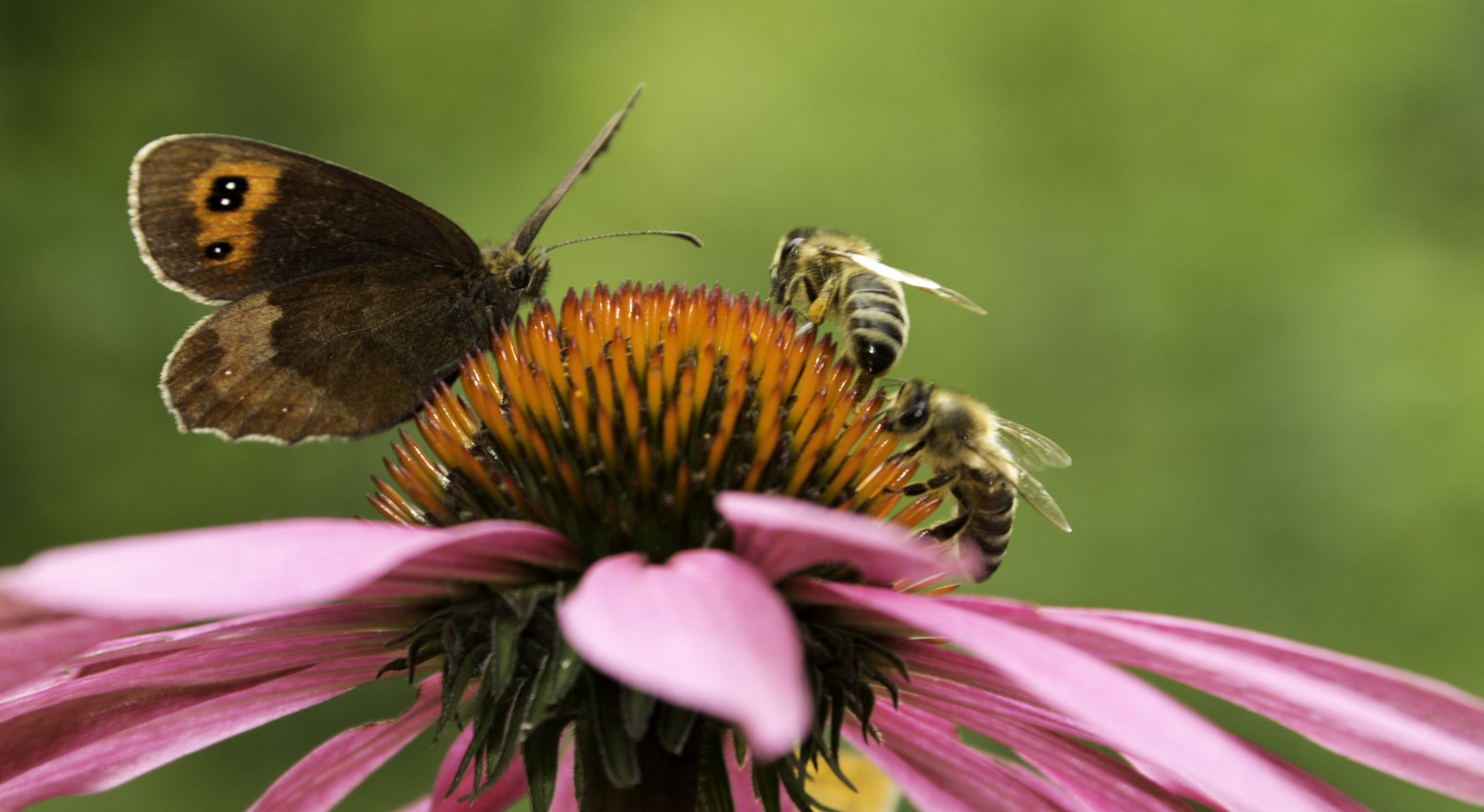 At Home Science: Powerful Pollinator Activities with the WET Science Center - ThurstonTalk