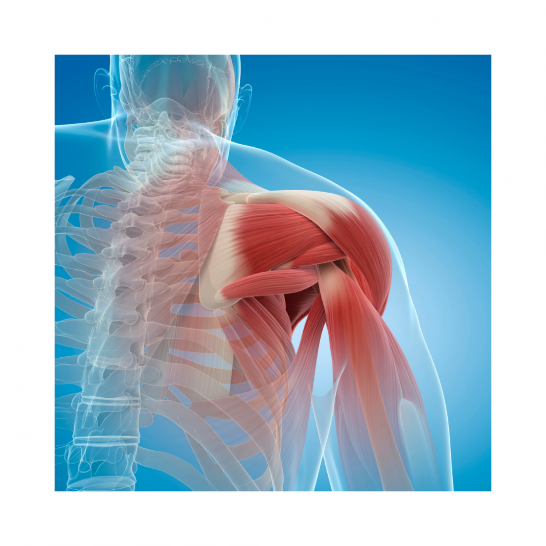 penrose physical therapy lacey shoulder pain