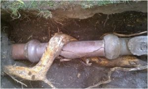 Boggs-Inspection-Services-Sewer-Scope-Root-Intrusion