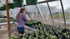 Yelm-Community-Schools-greenhouse