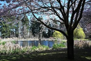 Cochrane-Park-Yelm