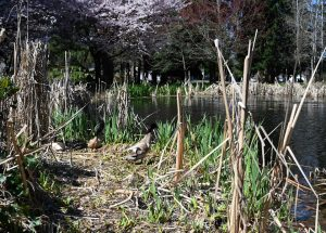 Cochrane-Park-yelm overgrown-vegetation