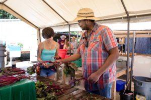 Evergreen-College-Summer-School-Organic-Farm
