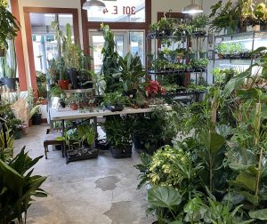 Garden Center olympia underhill plants